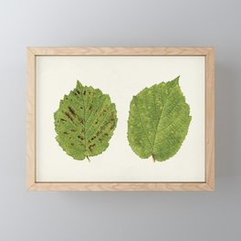 Hazelnut leaves (Corylus) (1924) Framed Mini Art Print