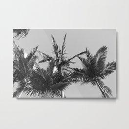 Queensland Palmtrees Black and White Metal Print