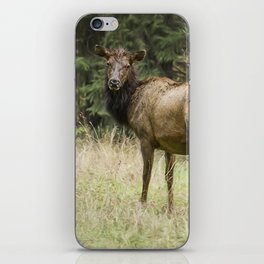 Female Wapiti iPhone Skin