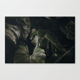 tropical xvii Canvas Print