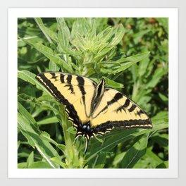 Swallowtail at Rest on Greenery Art Print