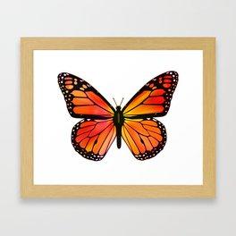 Monarch Butterfly  - Streaked Framed Art Print