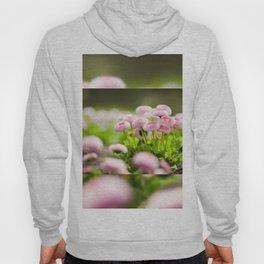 Bellis perennis pomponette called daisy Hoody