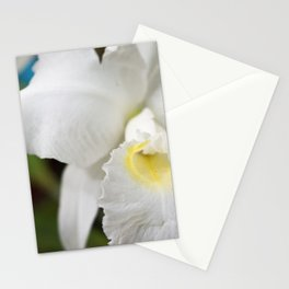 Orquidea Blanca Stationery Cards