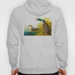 Great Norther Diver or Loon John James Audubon Scientific Birds Of America Illustration Hoody