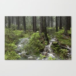 Mountains, forest, water. Canvas Print