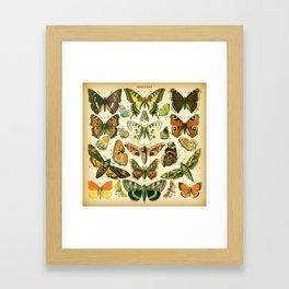 Papillons 1 Framed Art Print