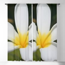 A Single Plumeria Flower Macro  Blackout Curtain