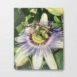 "Passiflora, ""Passionflower"" Metal Print"