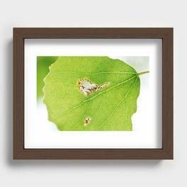 Aspen leaf 2 Recessed Framed Print
