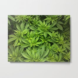 The Herbal Remedy Metal Print