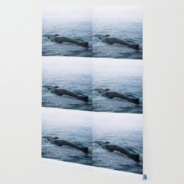 Humpback whale in the minimalist fog - photographing animals Wallpaper