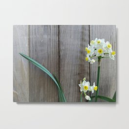 Daffodil Against a Brown Fence Metal Print