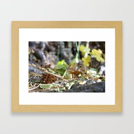 A Forest Floor Kind of View Framed Art Print
