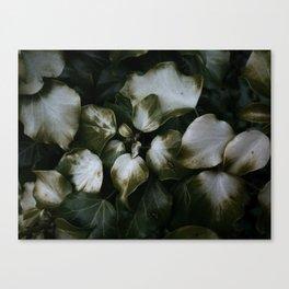 Burnt Ivy Canvas Print