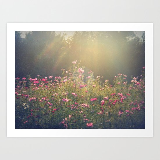 Cosmos in the Late Day Sun Art Print