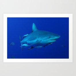 Grey Reef Shark on the Great Barrier Reef Art Print