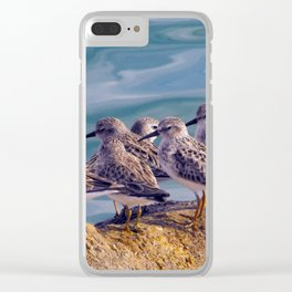 Young Shore Birds Clear iPhone Case