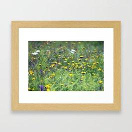 Summer Field Killington Vermont Framed Art Print