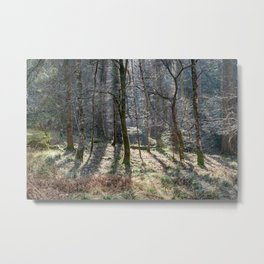 Sunlight in the Glade Metal Print