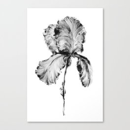 Flower Painting | Iris | Minimalism | Black And White | Rustic | Art Print Canvas Print