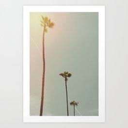 Hollywood Cemetary Palms Art Print