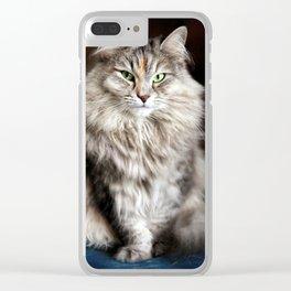 Siberian cat. Posing like a ballet dancer. Clear iPhone Case