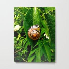 Snail on Leaf Metal Print