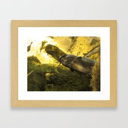 Catfish Framed Art Print