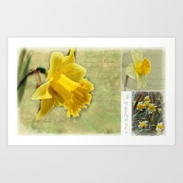 Daffodils from England Art Print