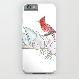 Sydney, Garlic, Cardinal iPhone Case