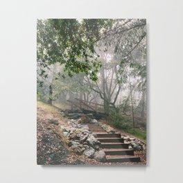 Mount Tamalpais State Park Metal Print