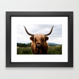 Scottish Highland Cattle in Scotland Portrait II Framed Art Print