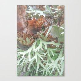Ethereal Elkhorn Canvas Print