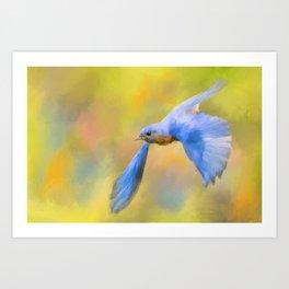 Bluebird Spring Flight Art Print