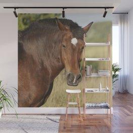 Brown horse portrait Wall Mural