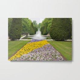 Purple and yellow pansies blooming Metal Print
