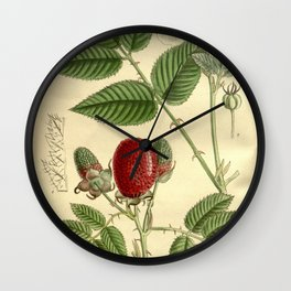 Rubus illecebrosus 143 8704 Wall Clock