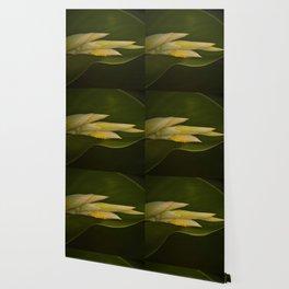 Calla Lily Buds II Wallpaper