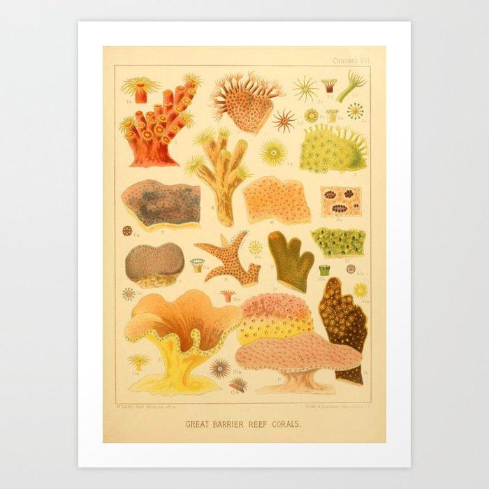 Antique Naturalist Coral Kunstdrucke