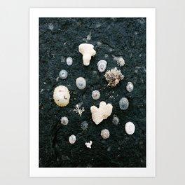 Tiny Shells Art Print