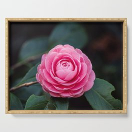 Pink Perfection Camellia Japonica Spring Bloom Serving Tray