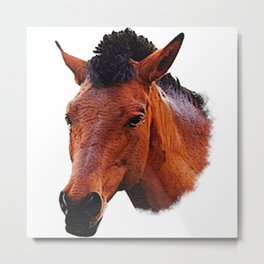 Foal red brown, horse baby Metal Print