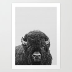 Buffalo Print, Bison Wall Art, Photography Print Art Print
