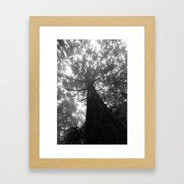 Muir View Framed Art Print