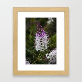 Hebe Lilac Framed Art Print