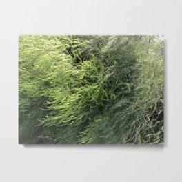 Abstract Asparagus Metal Print