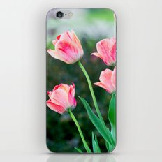 Pink Tulips iPhone & iPod Skin