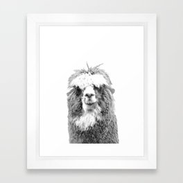 Black and White Alpaca Framed Art Print
