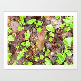NEW GROWTH - SPRING ORIGINAL Art Print